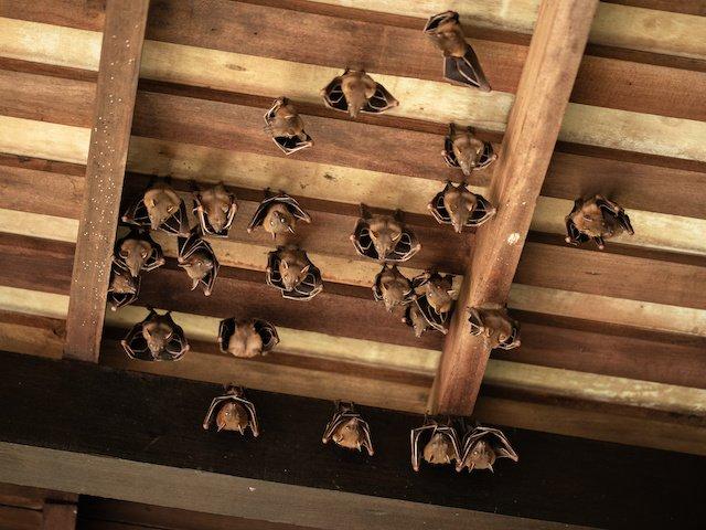 bat control ideas